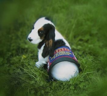 CARIO chien entrainement - Fondation Corazon du Québec - Chien d'assistace médicale